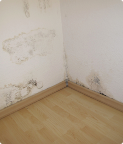 Mold on a Wall - Mold Inspection Raleigh NC
